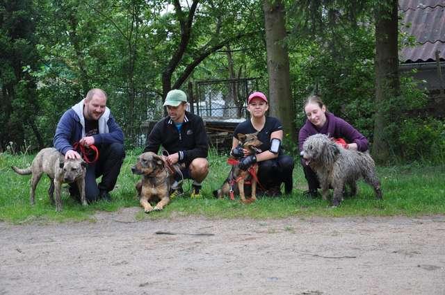 Te cztery fantastyczne psiaki na zdjęciu to: Tajga, Diana, Rzutek i Misiek. One ciągle czekają na kogoś, kto ofiaruje im miłość i dom - full image