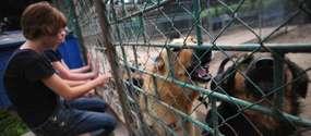 Szczekanie psów znajdujących się w schronisku przeszkadza okolicznym mieszkańcom