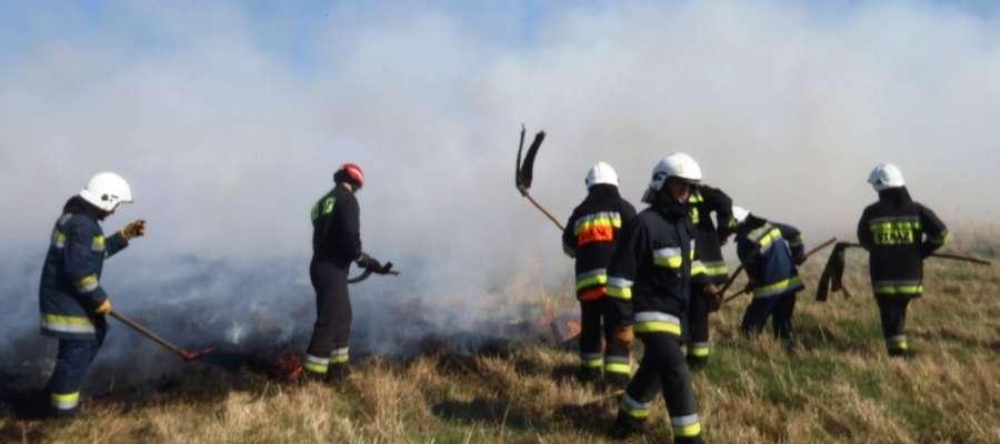 Jako pierwsi na miejsce pożaru przybyli strażacy-ochotnicy z OSP Frombork oraz z JRG PSP w Braniewie