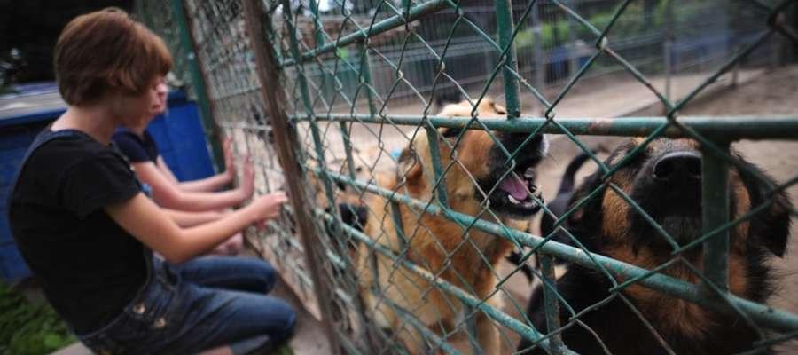 Schronisko dla bezdomnych zwierząt znajduje się przy ul. Królewieckiej