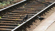 Kradli elementy torów kolejowych