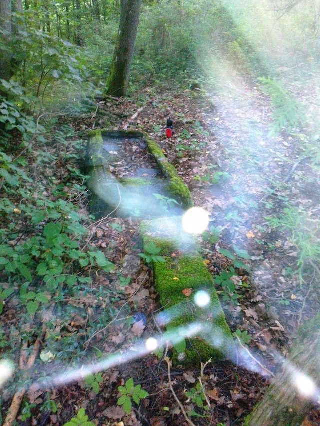 Tomaszyn: cmentarz ewangelicki - full image