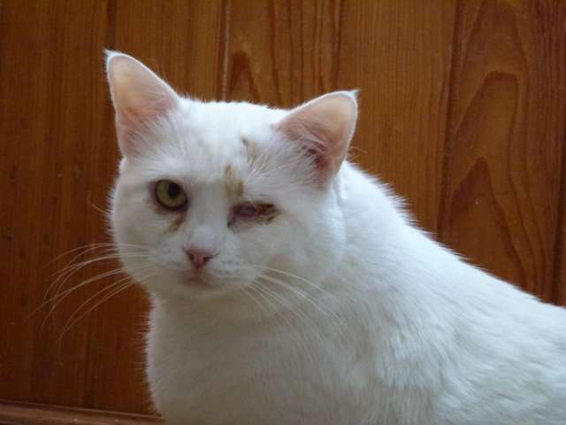 Pięć słodkich kotków szuka domu - full image