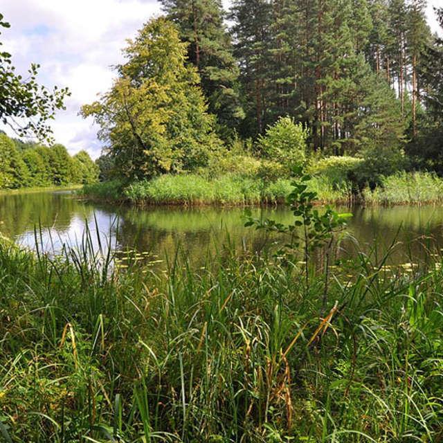 Rezerwat przyrody Boczki - full image