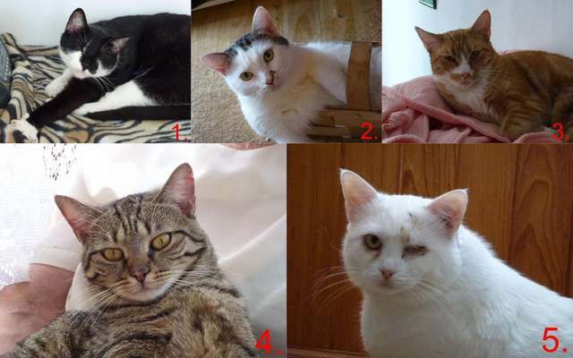 5 kotków szuka domu - full image
