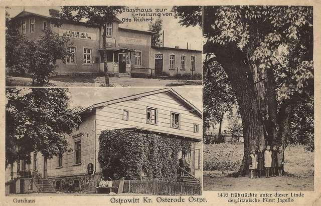 """Ostrowite na pocztówce sprzed 1938 roku. Z lewej u góry – oberża Otto Tejcherta, poniżej dwór z werandą, z prawej """"Lipa Jagiełły - full image"""