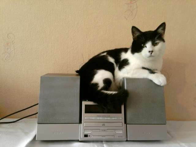 Zaginął biało-czarny kot. Pomóżcie go znaleźć! - full image