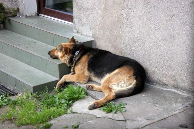 Wysokie temperatury mogą okazać się bardzo niebezpieczne również dla zwierząt