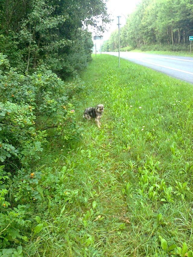 Pilnie potrzebna pomoc na trasie Stawiguda-Miodówko - full image