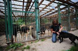 W elbląskim schronisku przebywa obecnie blisko 280 psów i 100 kotów