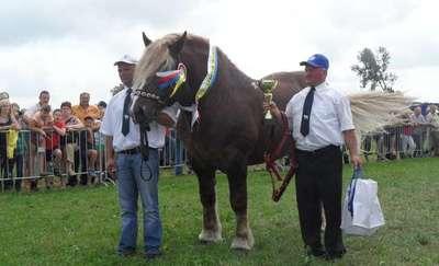 Zapraszamy na wystawę koni zimnokrwistych do Janowa