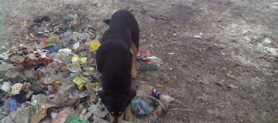 Tak składowane były śmieci na os. Leśnym w Prostkach