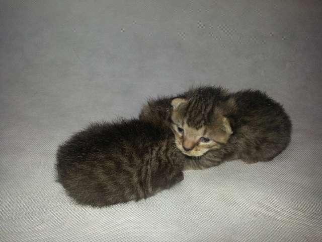 Szukają domu dla małych kotków - full image