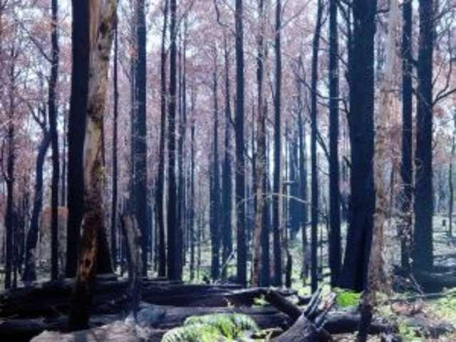 Płoną lasy na Mazowszu. Zagrożenie pożarowe - full image