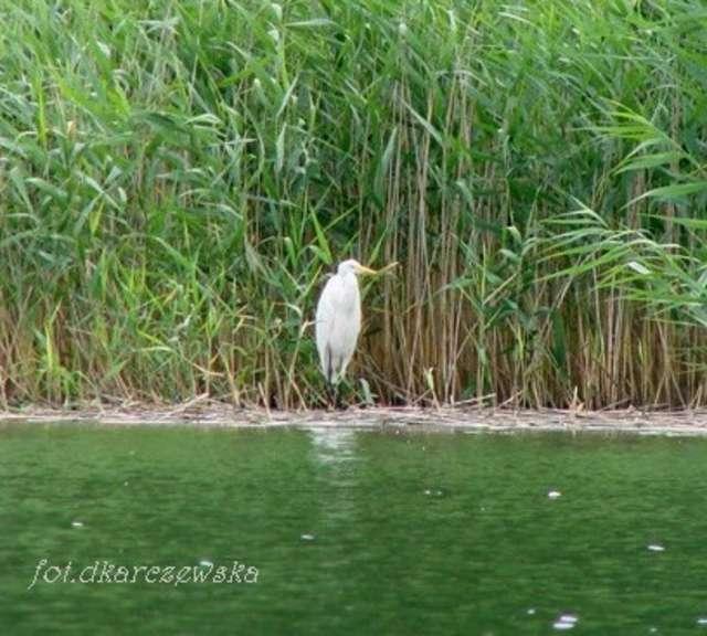 Biała dama z jeziora Sasek Wielki - full image