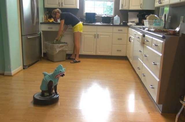 Kot w przebraniu rekina zmywa podłogę - full image