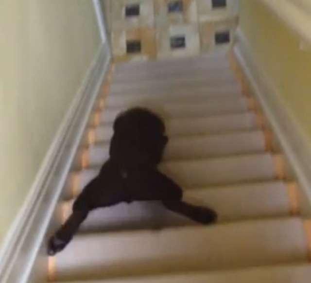 Pies, który oszukał system! Zobacz film! - full image