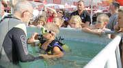 Letnie nurkowanie w Letniej Redakcji