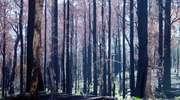 Płoną lasy na Mazowszu. Zagrożenie pożarowe