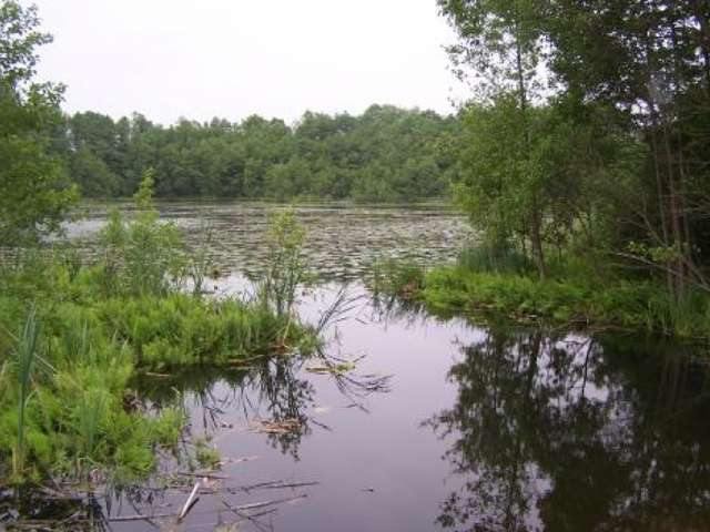 Rezerwat przyrody Nietlickie Bagno - full image