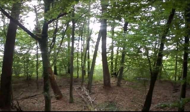 Jezioro Kośno prześwituje przez las w rezerwacie - full image