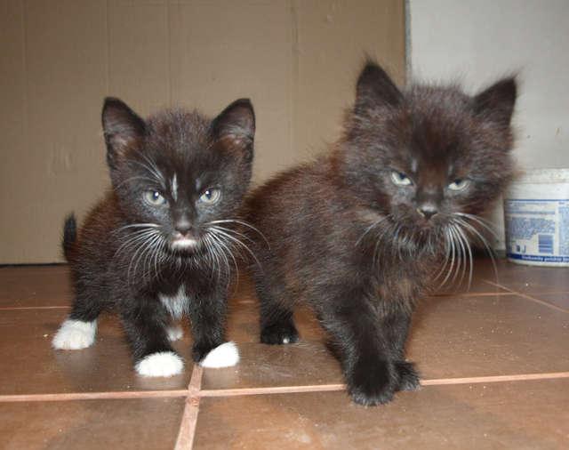Kotki szukają domu. Kto je przygarnie? - full image