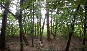 Rezerwat przyrody Jezioro Kośno