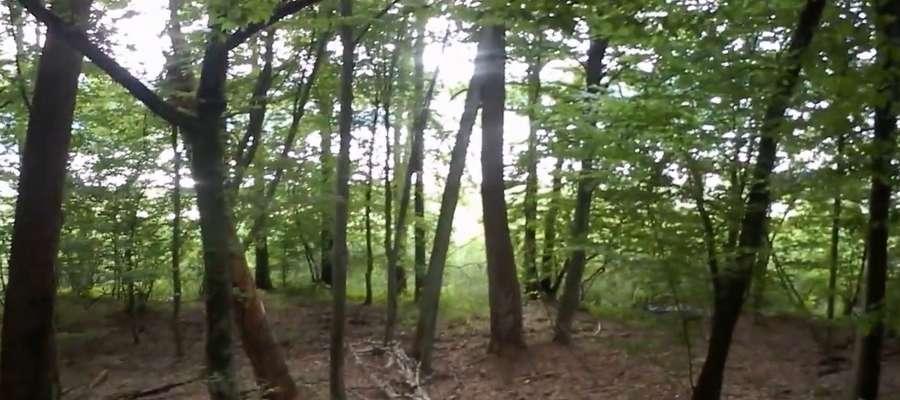 Jezioro Kośno prześwituje przez las w rezerwacie