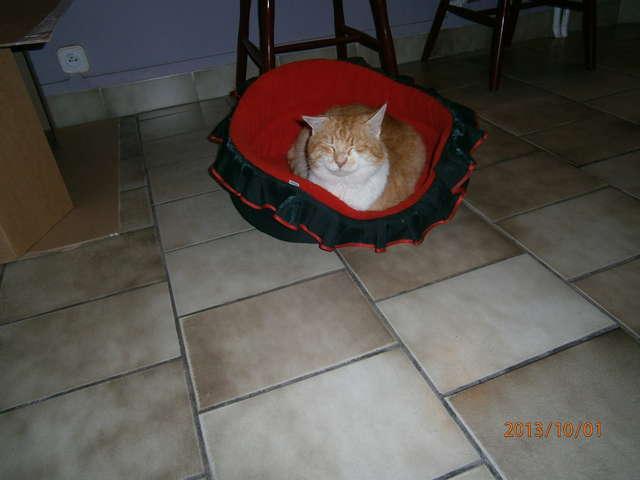 Zagubiony kot szuka starego lub nowego opiekuna - full image