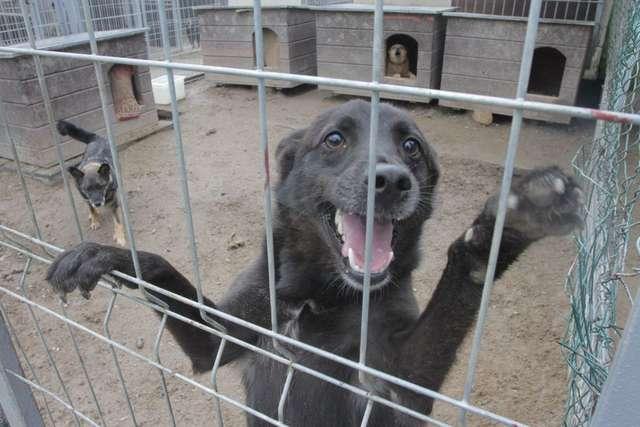 Psy z Ełku pojadą na Podlasie - full image