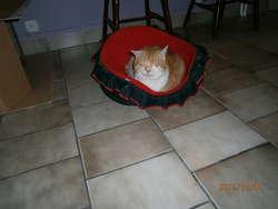 Zagubiony kot szuka starego lub nowego opiekuna