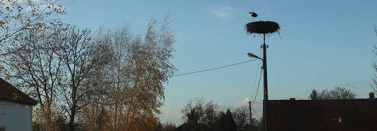 Taki widok w końcu października to niezwykła rzadkość. Bocian z Sułowa nie odleciał na zimę.