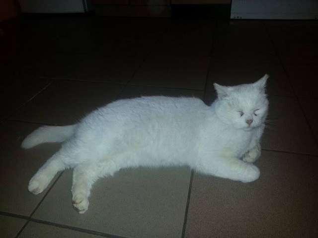 Kotek czeka na właściciela - full image