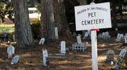 Cmentarz dla zwierząt w Olsztynie?