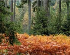 Rezerwat przyrody Dziki Kąt