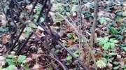 Rydwągi: resztki cmentarza ewangelickiego