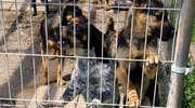 Sąd ma zdecydować, czy psy ze schroniska szczekają za głośno