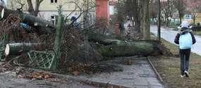 Wiatr będzie silny, może łamać drzewa i zrywać linie energetyczne