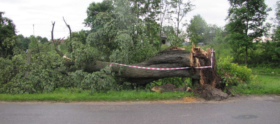 Nadchodzą silne wiatry — połamane drzewa mogą zagrażać podróżującym. Zachowajmy szczególną ostrożność