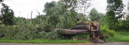 Połamane drzewa mogą zagrażać podróżującym. Zachowajmy szczególną ostrożność (zdjęcie jest ilustracją do tekstu)