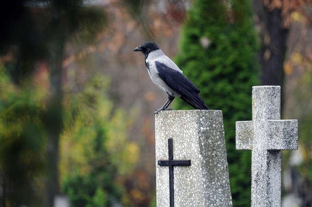 Cmentarz Dębica już w sieci - full image