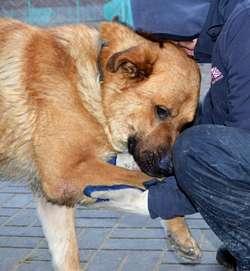Zostań wolontariuszem i pomóż zwierzakom