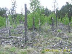 """Las Ochronny """"Szast"""" -  475-hektarowy fragment Puszczy Piskiej, który po huraganie w 2002 roku pozostawiono działaniu natury."""