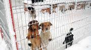 Elbląskie schronisko dla zwierząt prosi o wsparcie finansowe