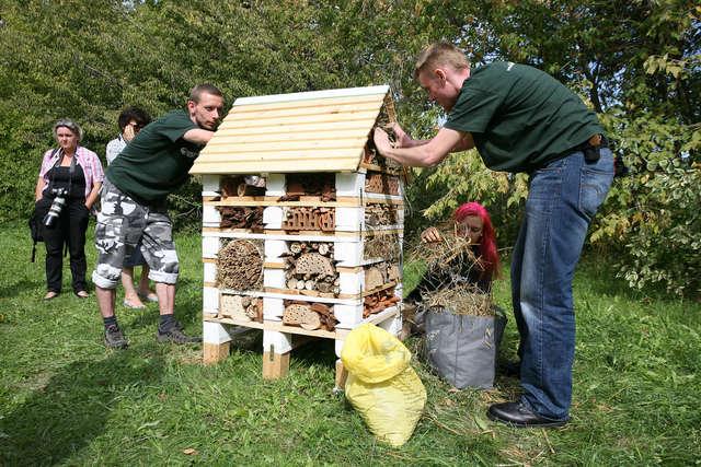 Pierwszy w Polsce hotel dla pszczół stanął w 2013 roku na Polu Mokotowskim w Warszawie - full image