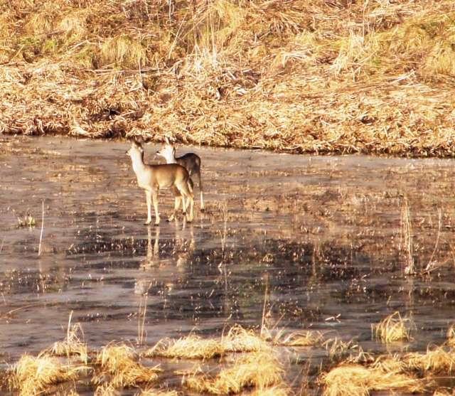 Leśnicy sprawdzają, ile zwierząt mieszka w lasach pod Olsztynem - full image