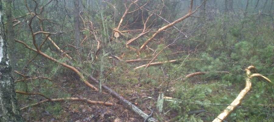 Kradzieże w lasach są coraz częstszym przestępstwem