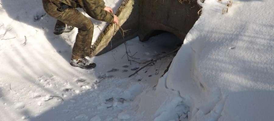 Miejsce zastawiania wnyków na bobry
