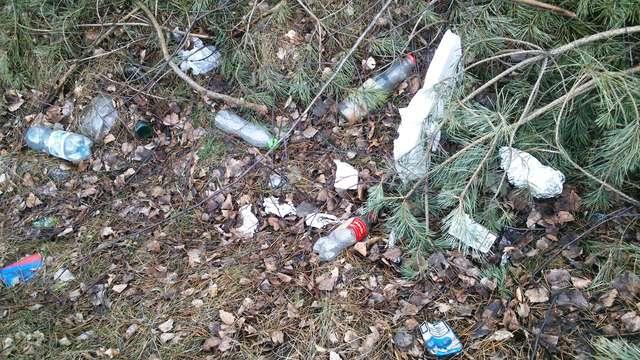 Tak wygląda las tuż przy ostrowskiej obwodnicy - full image