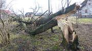 Wiatr łamie drzewa i zrywa dachy